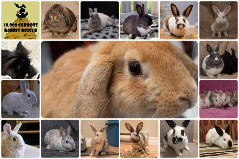3a930ab84 10,000 Carrots Rabbit Rescue. The first ...